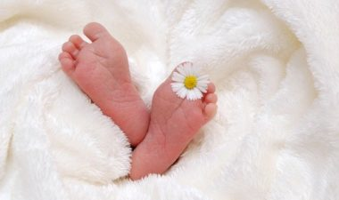 Babies feet wrapped in a soft white fleece, with a single daisy flower between toes.